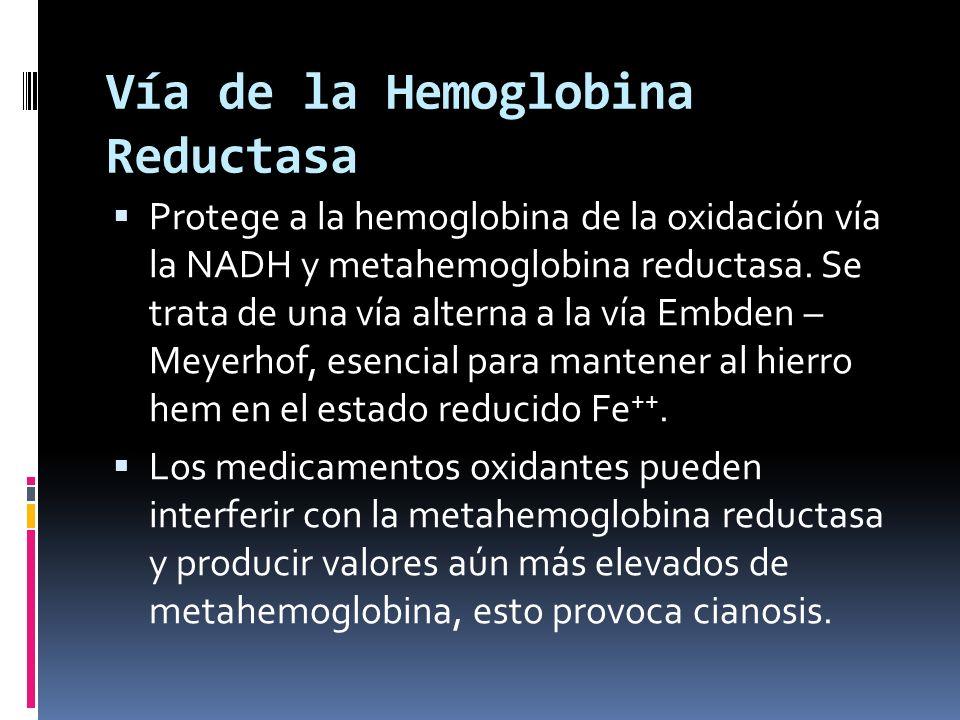 Vía de la Hemoglobina Reductasa Protege a la hemoglobina de la oxidación vía la NADH y metahemoglobina reductasa. Se trata de una vía alterna a la vía