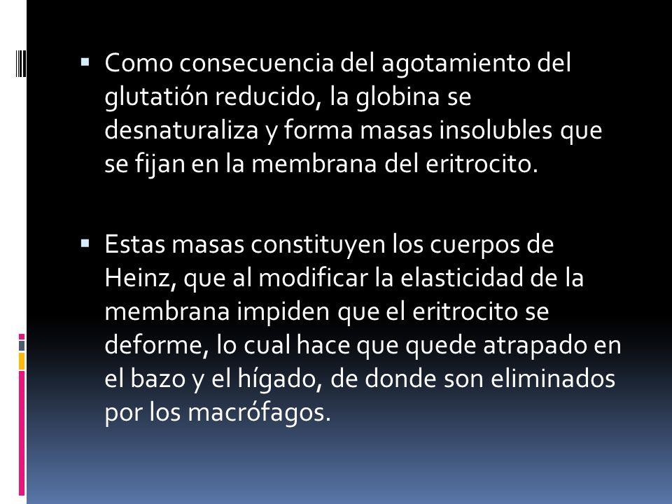 Como consecuencia del agotamiento del glutatión reducido, la globina se desnaturaliza y forma masas insolubles que se fijan en la membrana del eritroc