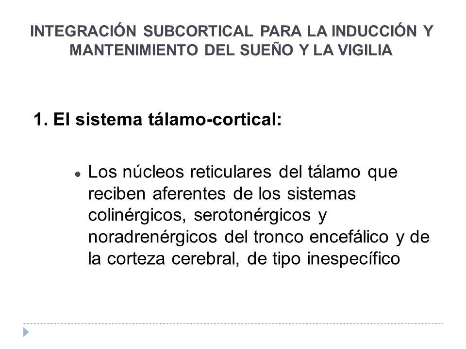 INTEGRACIÓN SUBCORTICAL PARA LA INDUCCIÓN Y MANTENIMIENTO DEL SUEÑO Y LA VIGILIA 1. El sistema tálamo-cortical: Los núcleos reticulares del tálamo que