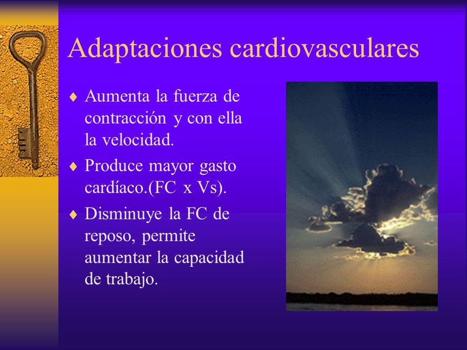 El corazón. Adaptaciones anatómicas. Aumenta el grosor de sus paredes. 300-500gr x 900-1300mlt 150-200gr x 600-800 mlt Aumenta el tamaño del corazón