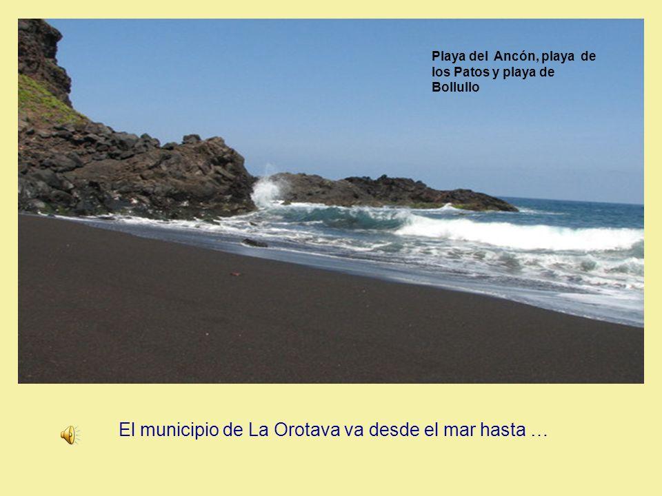Desde el mar hasta… Playa del Ancón, playa de los Patos y playa de Bollullo El municipio de La Orotava va desde el mar hasta …