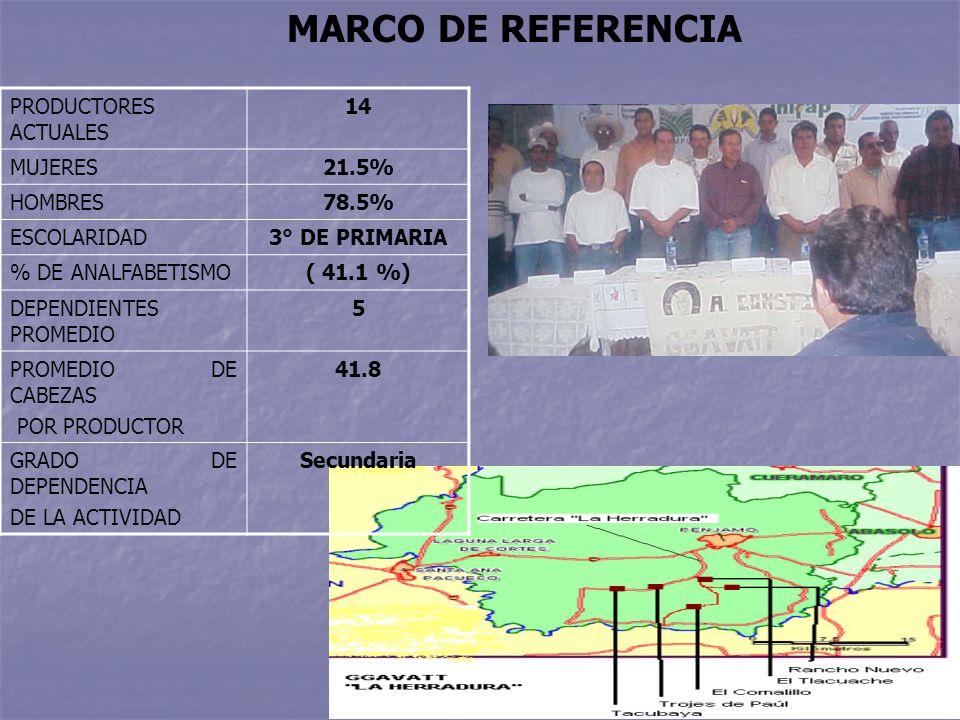 MARCO DE REFERENCIA PRODUCTORES ACTUALES 14 MUJERES21.5% HOMBRES78.5% ESCOLARIDAD3° DE PRIMARIA % DE ANALFABETISMO( 41.1 %) DEPENDIENTES PROMEDIO 5 PROMEDIO DE CABEZAS POR PRODUCTOR 41.8 GRADO DE DEPENDENCIA DE LA ACTIVIDAD Secundaria