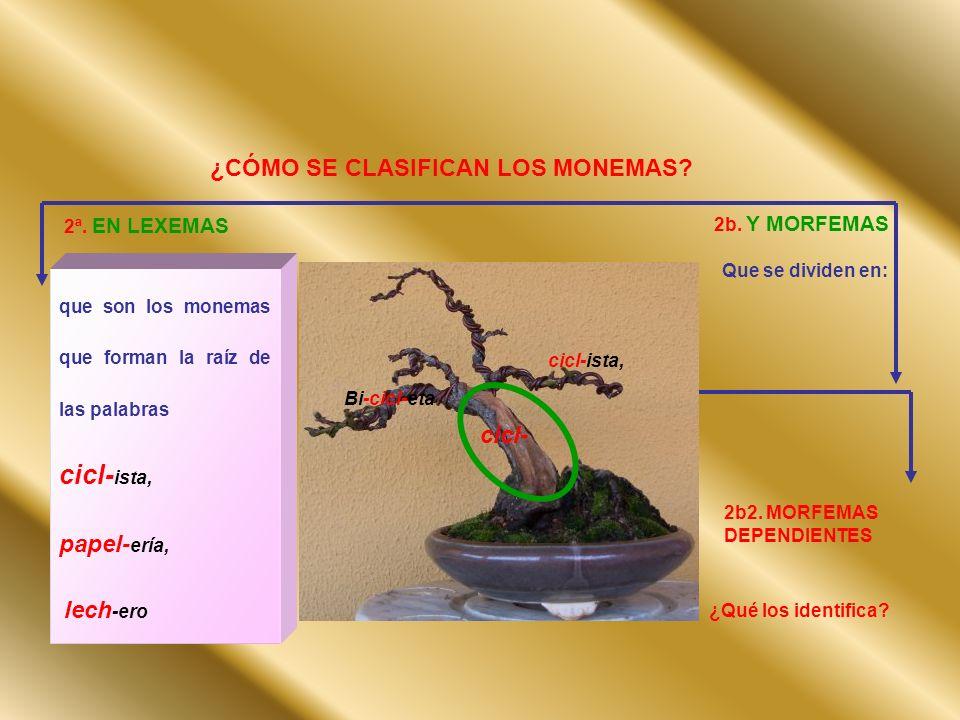 ¿CÓMO SE CLASIFICAN LOS MONEMAS? 2ª. EN LEXEMAS que son los monemas que forman la raíz de las palabras cicl- ista, papel- ería, lech -ero 2b. Y MORFEM