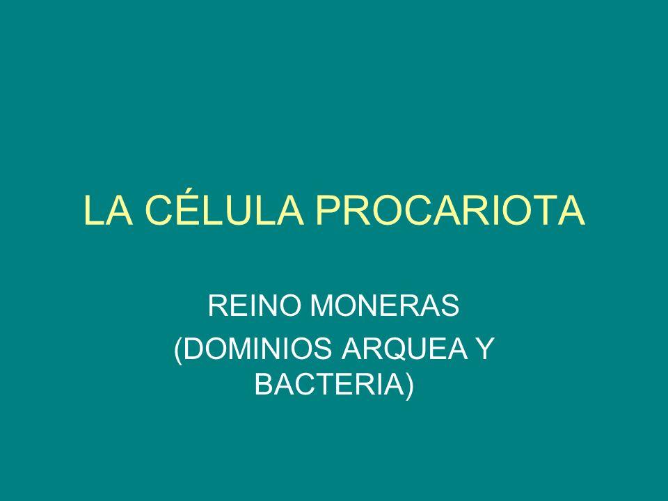LA CÉLULA PROCARIOTA REINO MONERAS (DOMINIOS ARQUEA Y BACTERIA)