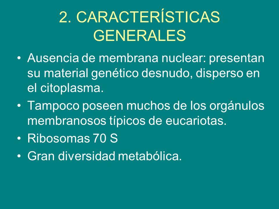 2. CARACTERÍSTICAS GENERALES Ausencia de membrana nuclear: presentan su material genético desnudo, disperso en el citoplasma. Tampoco poseen muchos de