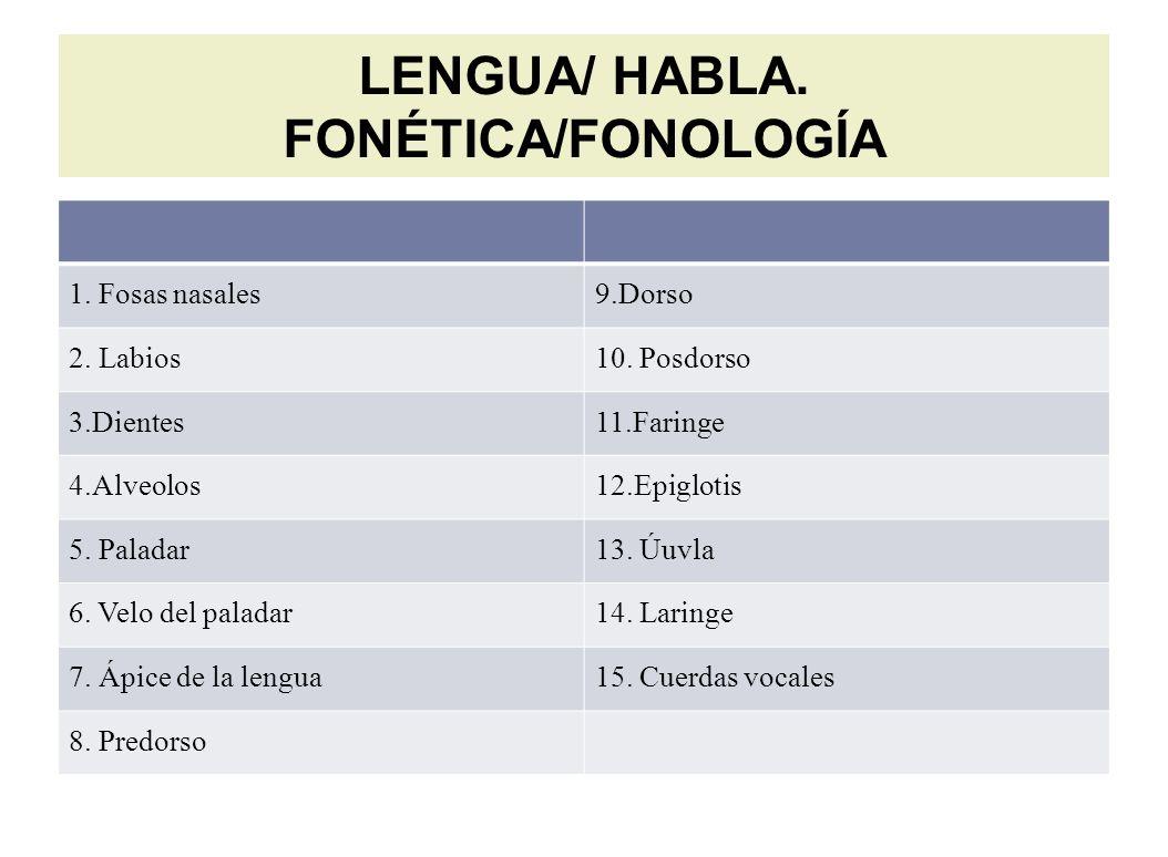 LENGUA/ HABLA. FONÉTICA/FONOLOGÍA 1. Fosas nasales9.Dorso 2.