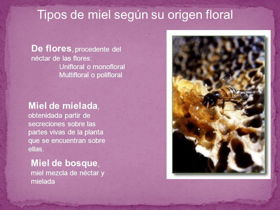Miel en panales o secciones, es la miel almacenada por las abejas en alvéolos operculados de panales recién construidos por ellas mismas que no contengan larvas y vendida en panal entero o partido Miel decantada, escurrida o en gota, obtenida por decantación del panal desoperculado Miel centrifugada, obtenida por centrifugado del panal Miel prensada (sin calentamiento o con calentamiento moderado) Miel cremosa (cristalización controlada) Tipos de miel según su presentación y procedimiento de extracción