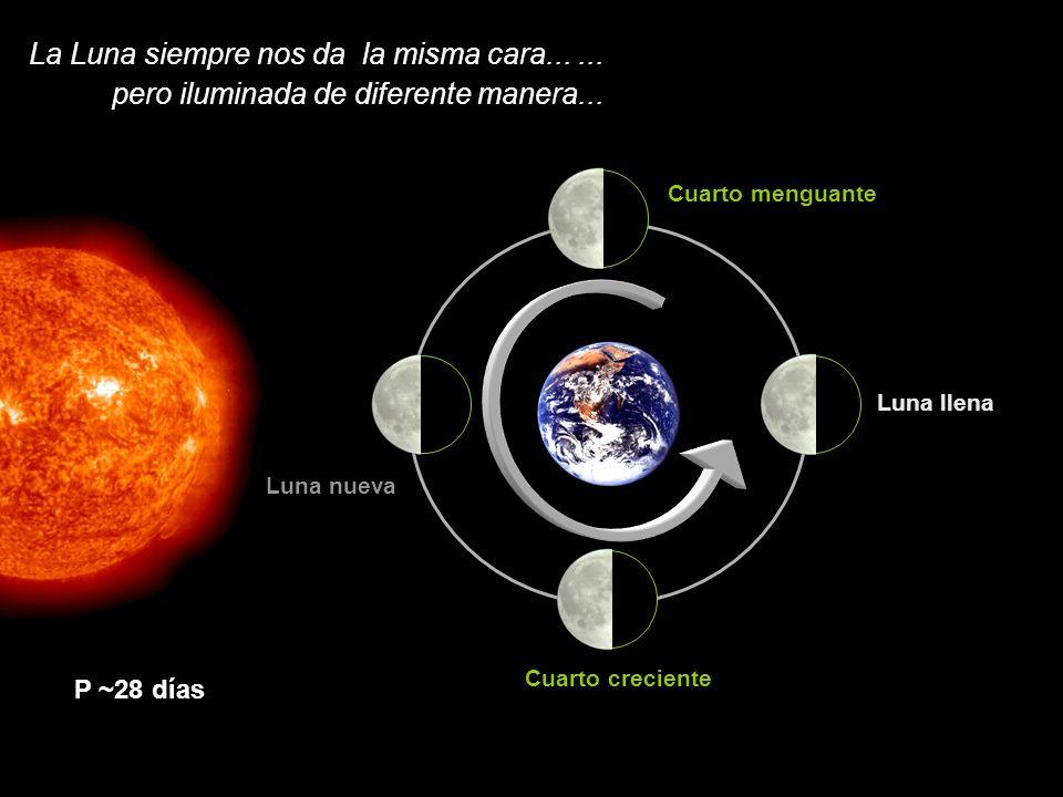 La Luna siempre nos da la misma cara...... pero iluminada de diferente manera... P ~28 días Cuarto menguante Luna llena Cuarto creciente Luna nueva