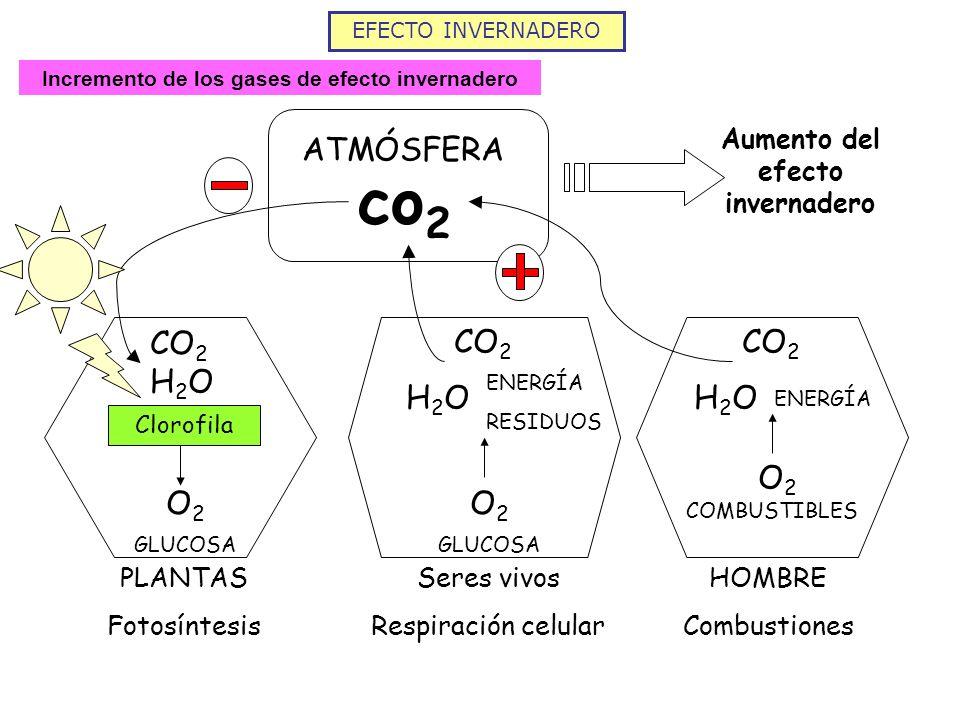 EFECTO INVERNADERO Incremento de los gases de efecto invernadero ATMÓSFERA co 2 CO 2 H2OH2O Clorofila O2O2 GLUCOSA PLANTAS Fotosíntesis Seres vivos Re
