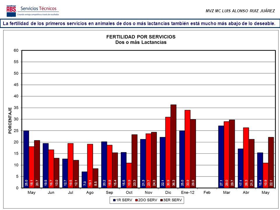 MVZ MC LUIS ALONSO RUIZ JUÁREZ La fertilidad de los primeros servicios en animales de dos o más lactancias también está mucho más abajo de lo deseable.