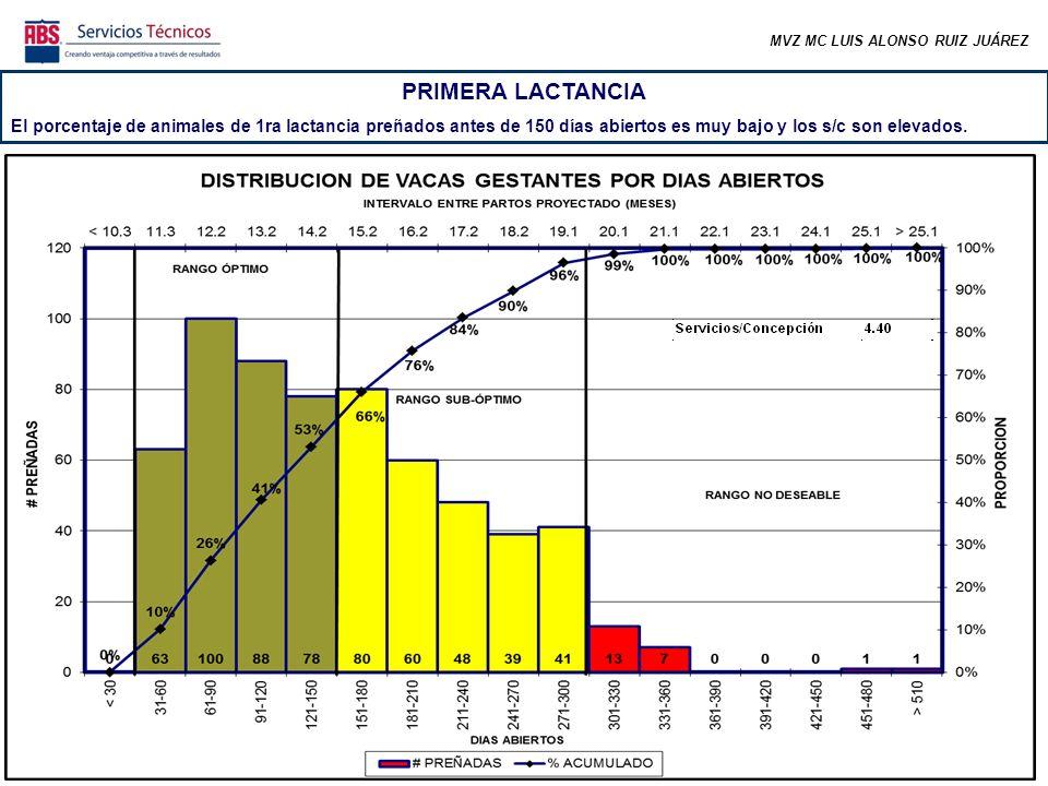 MVZ MC LUIS ALONSO RUIZ JUÁREZ PRIMERA LACTANCIA El porcentaje de animales de 1ra lactancia preñados antes de 150 días abiertos es muy bajo y los s/c