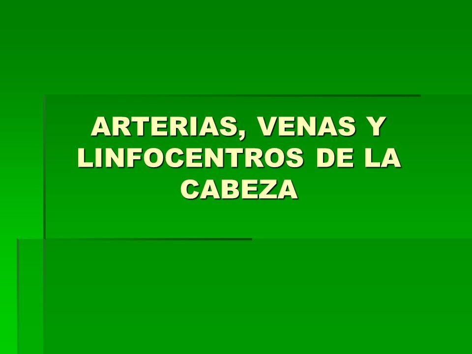 ARTERIAS, VENAS Y LINFOCENTROS DE LA CABEZA