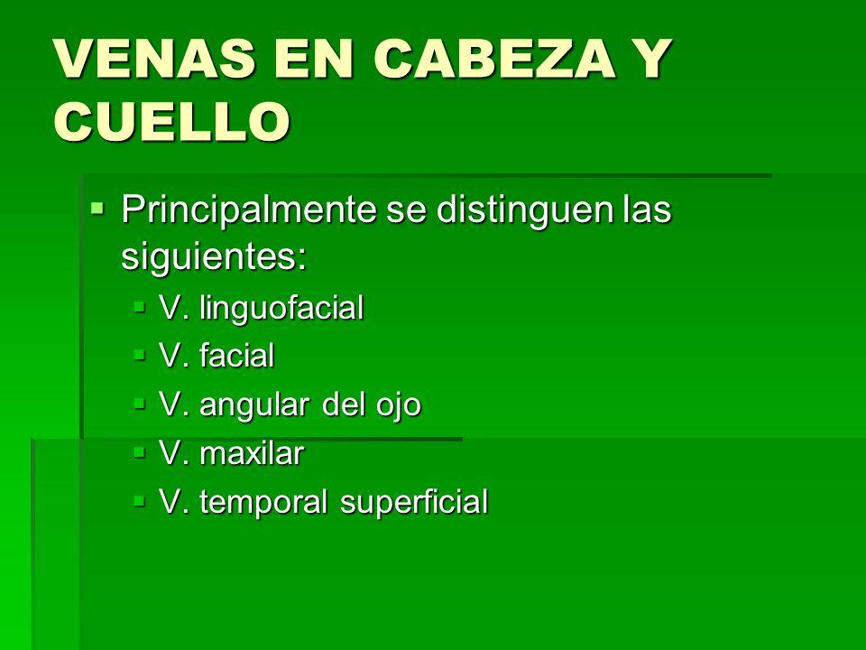VENAS EN CABEZA Y CUELLO Principalmente se distinguen las siguientes: Principalmente se distinguen las siguientes: V. linguofacial V. linguofacial V.