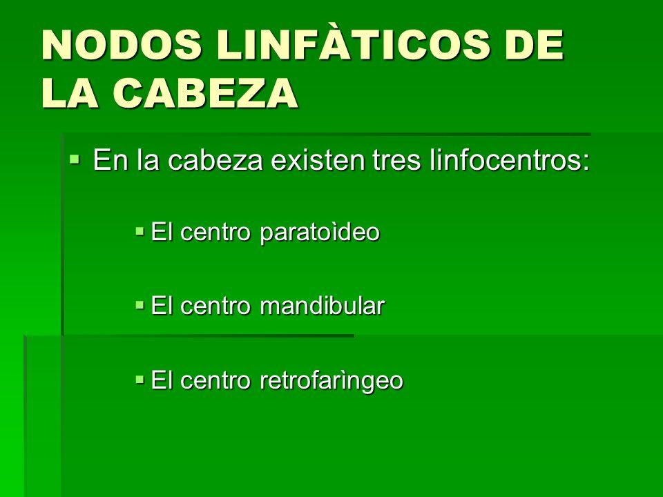 NODOS LINFÀTICOS DE LA CABEZA En la cabeza existen tres linfocentros: En la cabeza existen tres linfocentros: El centro paratoìdeo El centro paratoìde