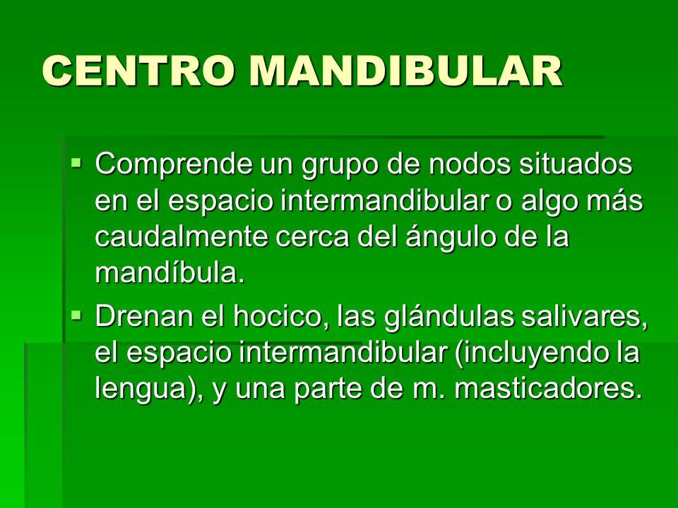 CENTRO MANDIBULAR Comprende un grupo de nodos situados en el espacio intermandibular o algo más caudalmente cerca del ángulo de la mandíbula. Comprend