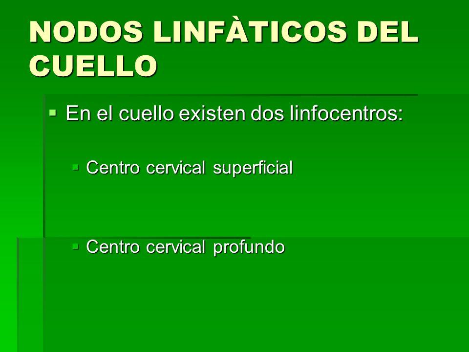 NODOS LINFÀTICOS DEL CUELLO En el cuello existen dos linfocentros: En el cuello existen dos linfocentros: Centro cervical superficial Centro cervical