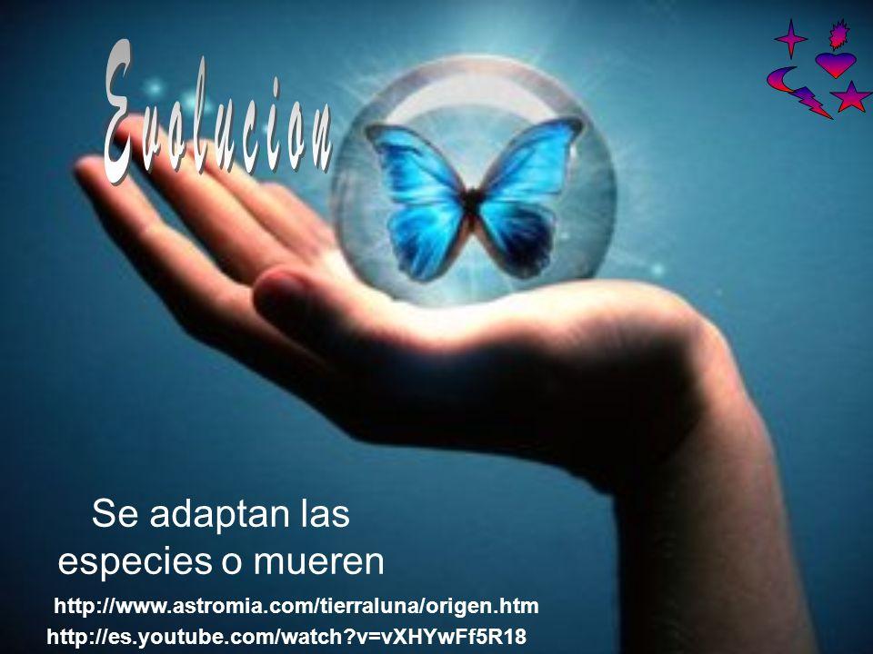 Se adaptan las especies o mueren http://www.astromia.com/tierraluna/origen.htm http://es.youtube.com/watch v=vXHYwFf5R18