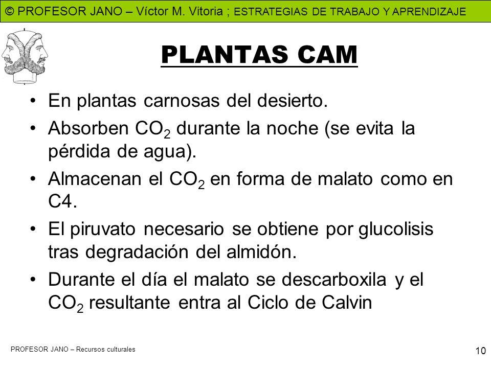 © PROFESOR JANO – Víctor M. Vitoria ; ESTRATEGIAS DE TRABAJO Y APRENDIZAJE PROFESOR JANO – Recursos culturales 10 PLANTAS CAM En plantas carnosas del