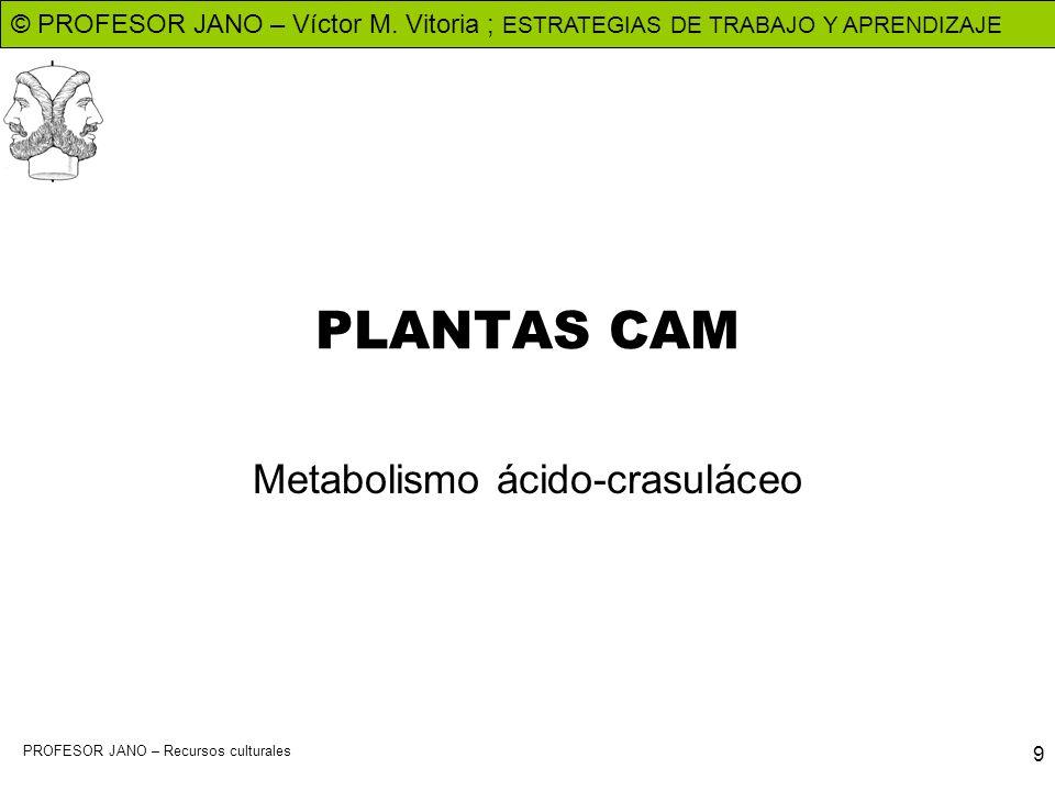 © PROFESOR JANO – Víctor M. Vitoria ; ESTRATEGIAS DE TRABAJO Y APRENDIZAJE PROFESOR JANO – Recursos culturales 9 PLANTAS CAM Metabolismo ácido-crasulá