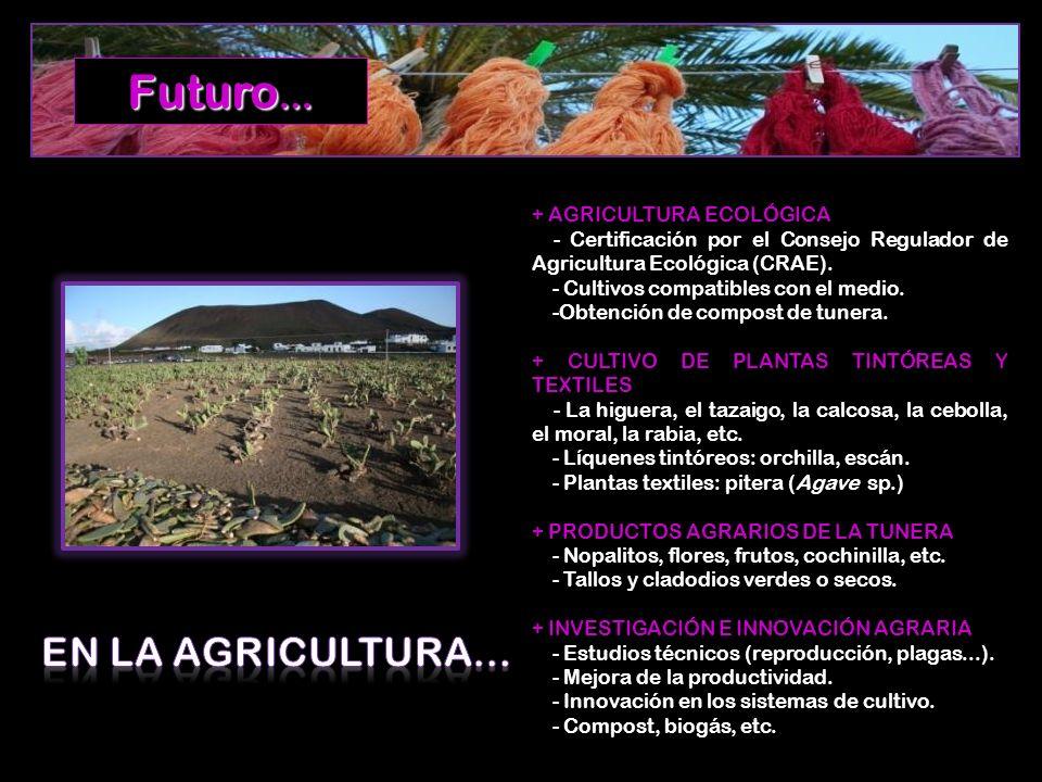 + AGRICULTURA ECOLÓGICA - Certificación por el Consejo Regulador de Agricultura Ecológica (CRAE). - Cultivos compatibles con el medio. -Obtención de c