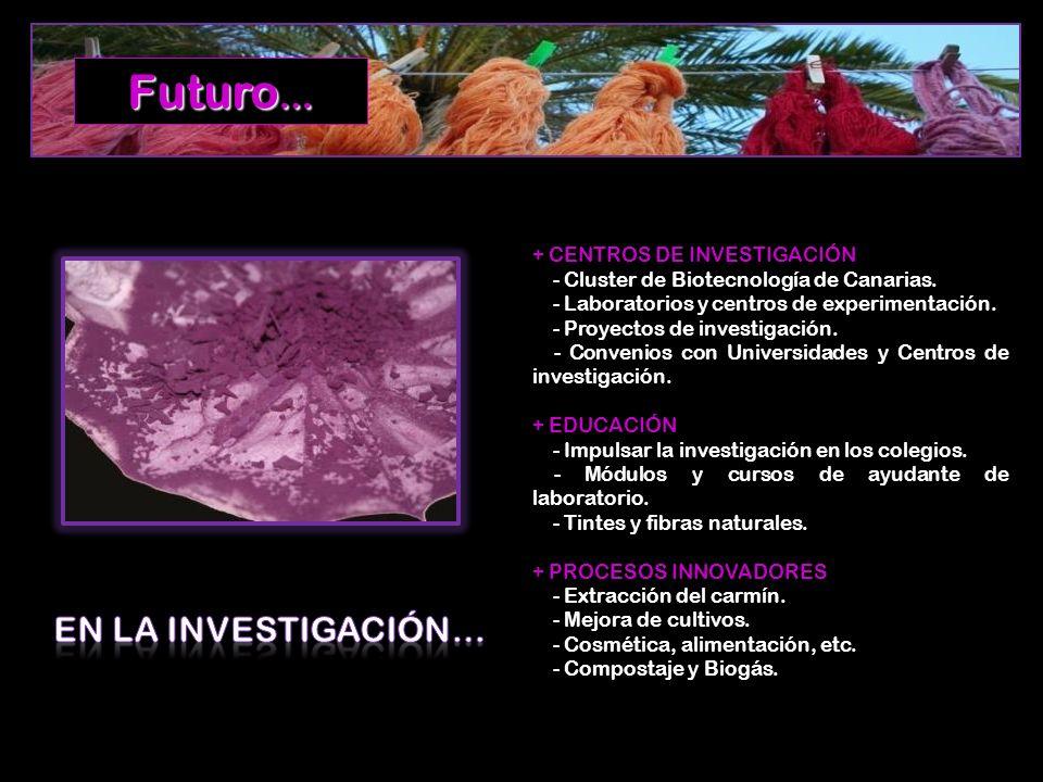 + CENTROS DE INVESTIGACIÓN - Cluster de Biotecnología de Canarias. - Laboratorios y centros de experimentación. - Proyectos de investigación. - Conven