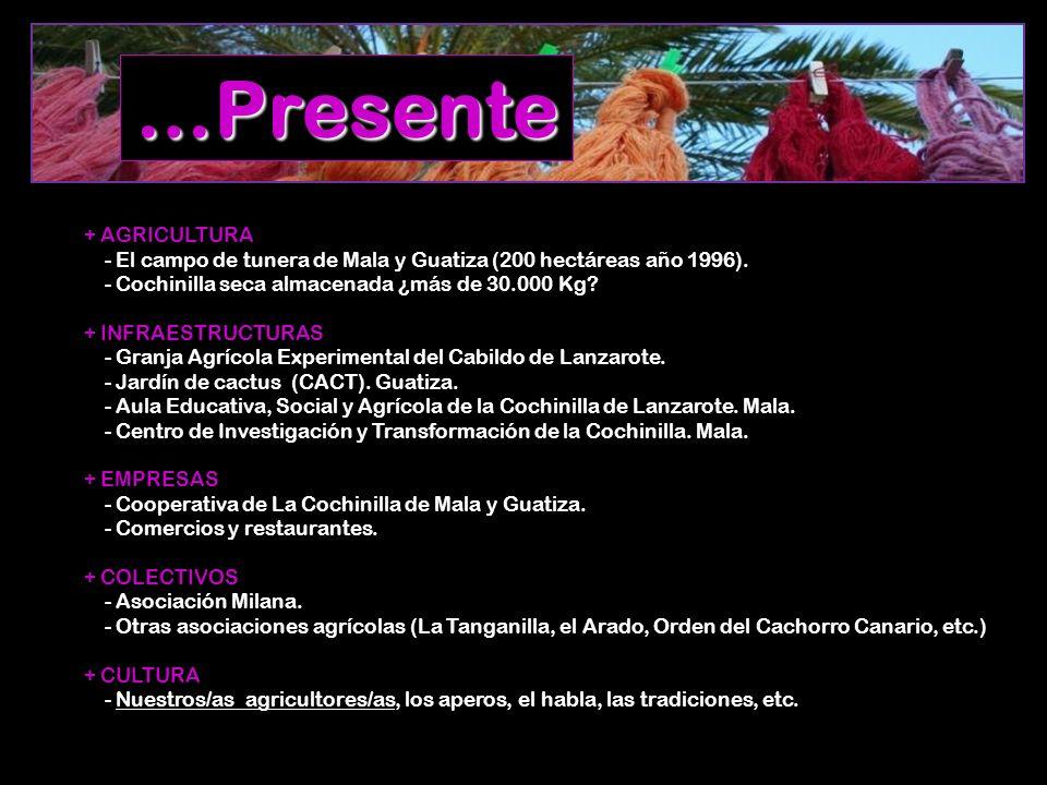 …Presente + AGRICULTURA - El campo de tunera de Mala y Guatiza (200 hectáreas año 1996). - Cochinilla seca almacenada ¿más de 30.000 Kg? + INFRAESTRUC