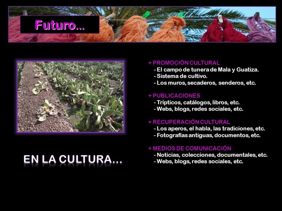 + PROMOCIÓN CULTURAL - El campo de tunera de Mala y Guatiza. - Sistema de cultivo. - Los muros, secaderos, senderos, etc. + PUBLICACIONES - Trípticos,