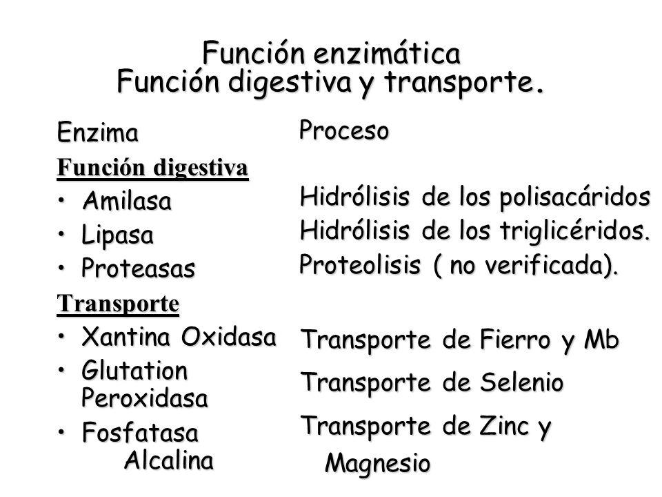 Función enzimática Función digestiva y transporte. Enzima Función digestiva AmilasaAmilasa LipasaLipasa ProteasasProteasasTransporte Xantina OxidasaXa