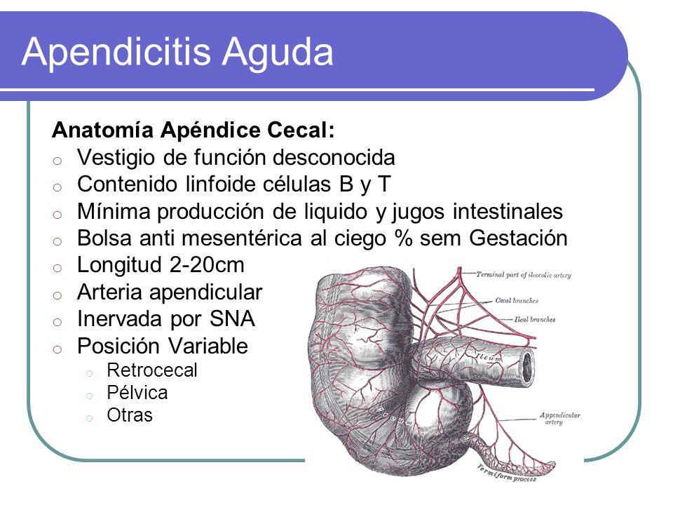 Apendicitis Aguda Anatomía Apéndice Cecal: o Vestigio de función desconocida o Contenido linfoide células B y T o Mínima producción de liquido y jugos