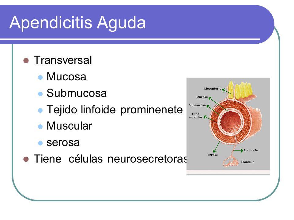 Transversal Mucosa Submucosa Tejido linfoide prominenete Muscular serosa Tiene células neurosecretoras