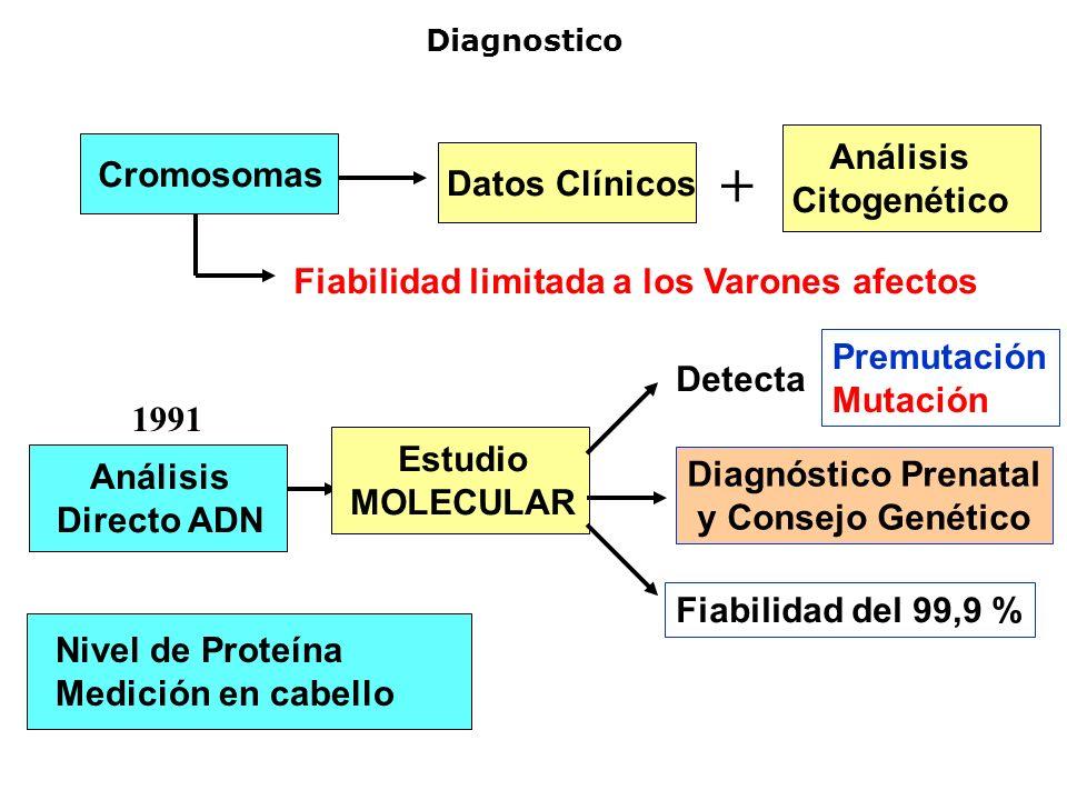 Diagnostico Cromosomas Datos Clínicos Análisis Citogenético + Fiabilidad limitada a los Varones afectos 1991 Análisis Directo ADN Nivel de Proteína Me