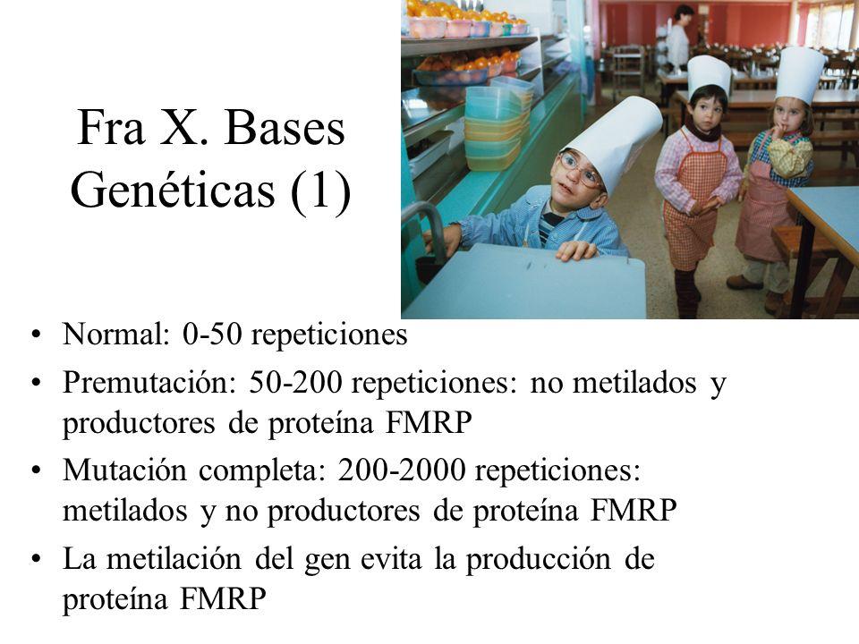 Fra X. Bases Genéticas (1) Normal: 0-50 repeticiones Premutación: 50-200 repeticiones: no metilados y productores de proteína FMRP Mutación completa: