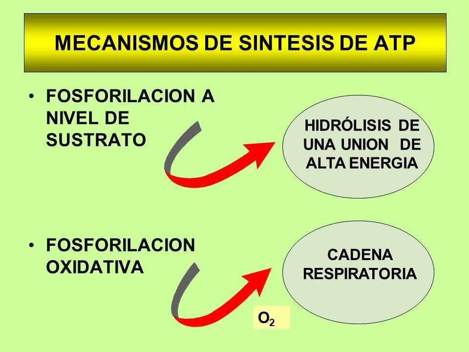 MECANISMOS DE SINTESIS DE ATP FOSFORILACION A NIVEL DE SUSTRATO FOSFORILACION OXIDATIVA CADENA RESPIRATORIA HIDRÓLISIS DE UNA UNION DE ALTA ENERGIA O2