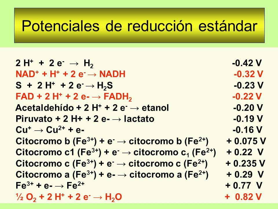 Potenciales de reducción estándar 2 H + + 2 e - H 2 -0.42 V NAD + + H + + 2 e - NADH -0.32 V S + 2 H + + 2 e - H 2 S -0.23 V FAD + 2 H + + 2 e- FADH 2