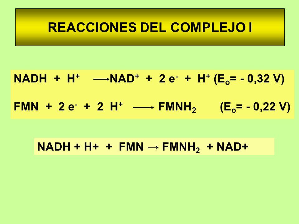 REACCIONES DEL COMPLEJO I NADH + H + NAD + + 2 e - + H + (E o = - 0,32 V) FMN + 2 e - + 2 H + FMNH 2 (E o = - 0,22 V) NADH + H+ + FMN FMNH 2 + NAD+
