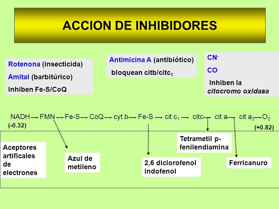 ACCION DE INHIBIDORES Aceptores artificales de electrones Azul de metileno 2,6 diclorofenol indofenol Ferricanuro Tetrametil p- fenilendiamina Rotenon