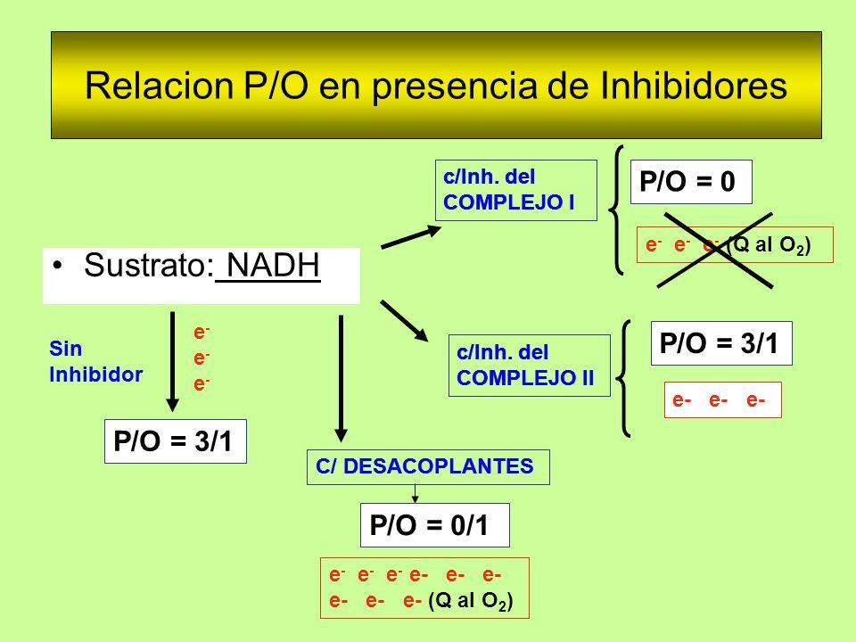 Relacion P/O en presencia de Inhibidores Sustrato: NADH Sin Inhibidor P/O = 3/1 c/Inh. del COMPLEJO II c/Inh. del COMPLEJO I C/ DESACOPLANTES e- e- e-