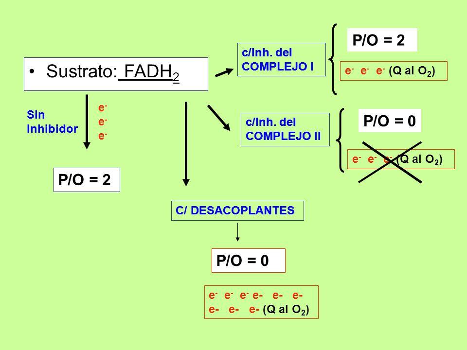 Sustrato: FADH 2 P/O = 2 c/Inh. del COMPLEJO I P/O = 2 P/O = 0 C/ DESACOPLANTES P/O = 0 Sin Inhibidor e-e-e-e-e-e- c/Inh. del COMPLEJO II e - e - e -