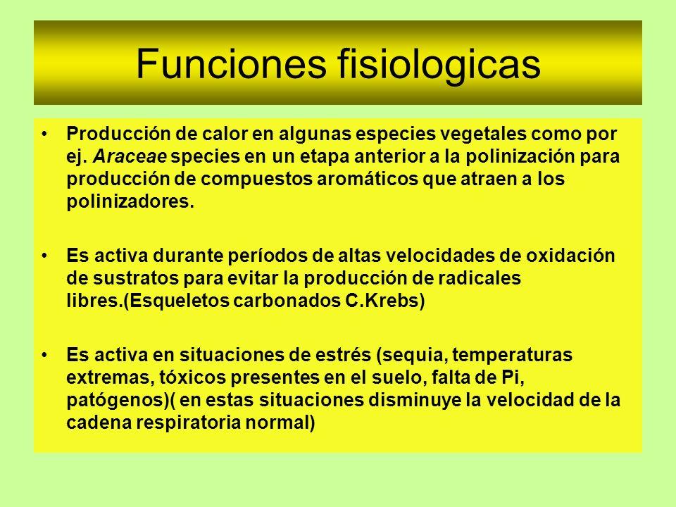 Funciones fisiologicas Producción de calor en algunas especies vegetales como por ej. Araceae species en un etapa anterior a la polinización para prod