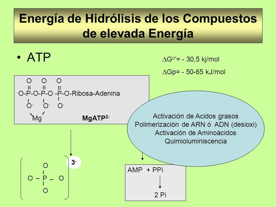 Energía de Hidrólisis de los Compuestos de elevada Energía ATP G o = - 30,5 kj/mol Gp= - 50-65 kJ/mol O O O - O-P-O-P-O -P-O-Ribosa-Adenina O - O - O