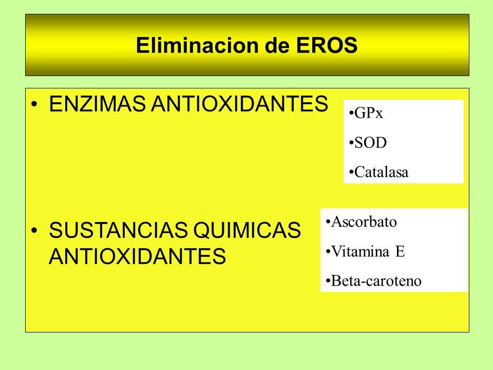 Eliminacion de EROS ENZIMAS ANTIOXIDANTES SUSTANCIAS QUIMICAS ANTIOXIDANTES Ascorbato Vitamina E Beta-caroteno GPx SOD Catalasa