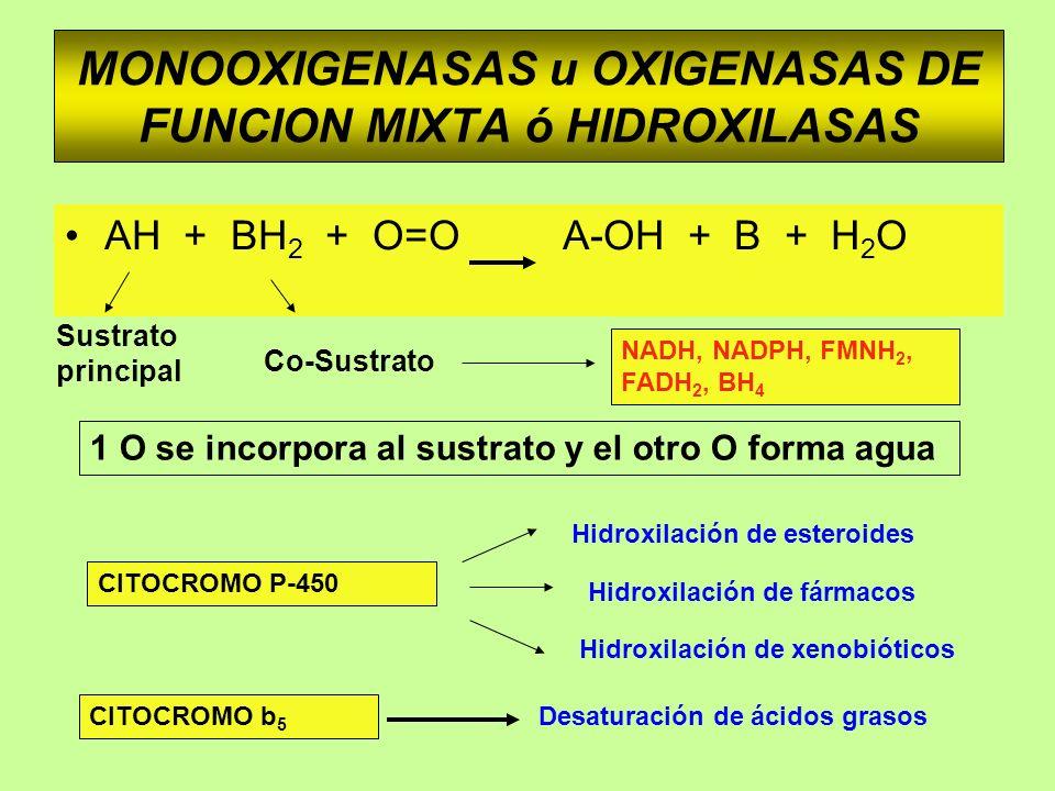 MONOOXIGENASAS u OXIGENASAS DE FUNCION MIXTA ó HIDROXILASAS AH + BH 2 + O=O A-OH + B + H 2 O 1 O se incorpora al sustrato y el otro O forma agua Sustr