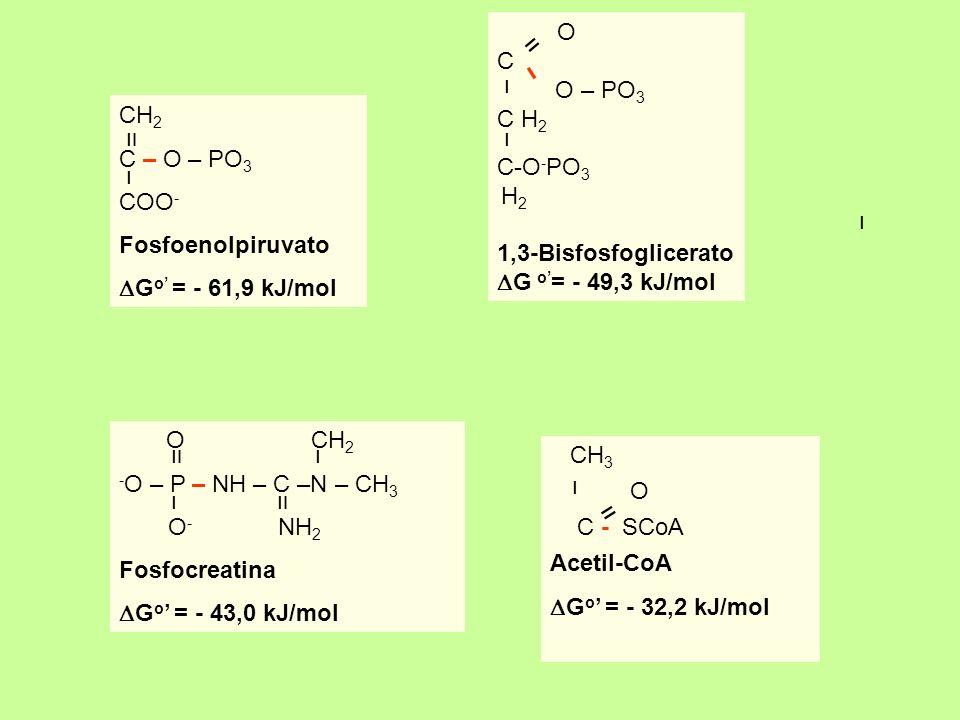 CH 2 C – O – PO 3 COO - Fosfoenolpiruvato G o = - 61,9 kJ/mol װ ו ו O C O – PO 3 C H 2 C-O - PO 3 H 2 1,3-Bisfosfoglicerato G o = - 49,3 kJ/mol װ ו ו
