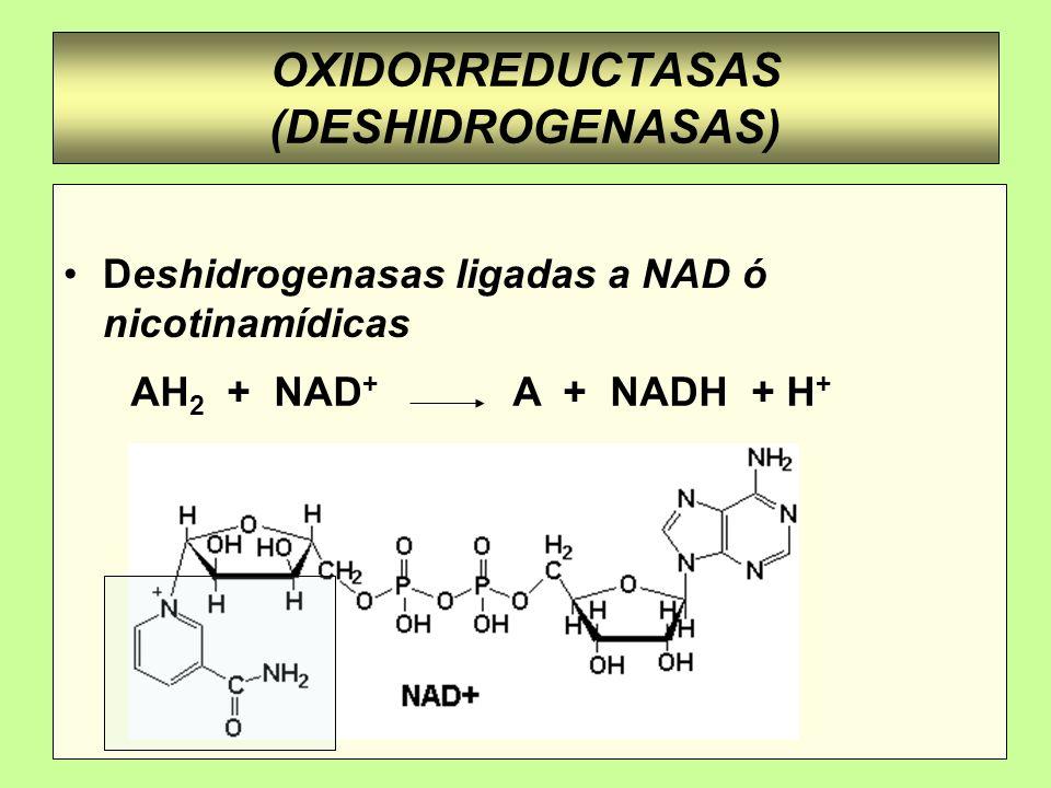 REACCION DE REDUCCION DE NAD + R H + :H - (ion hidruro)..