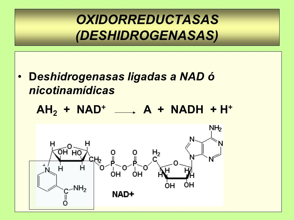 OXIDORREDUCTASAS (DESHIDROGENASAS) Deshidrogenasas ligadas a NAD ó nicotinamídicas AH 2 + NAD + A + NADH + H +