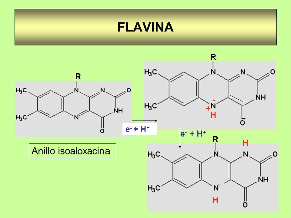 FLAVINA. H + - R R H H e - + H + Anillo isoaloxacina R e - + H +