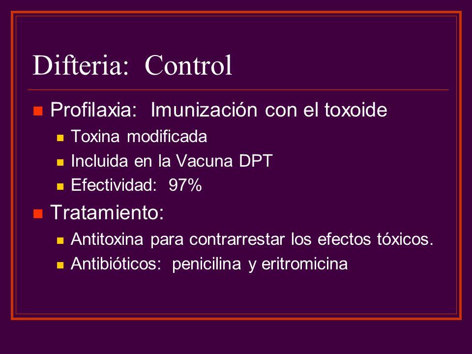 Difteria: Control Profilaxia: Imunización con el toxoide Toxina modificada Incluida en la Vacuna DPT Efectividad: 97% Tratamiento: Antitoxina para con