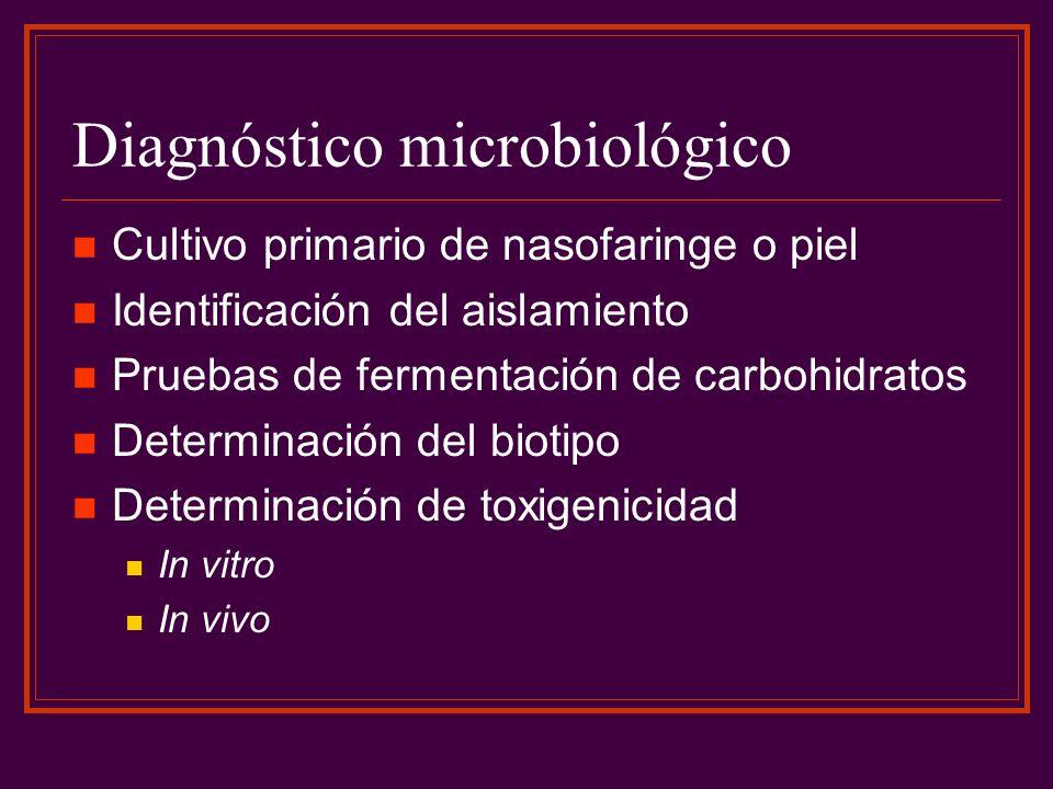 Diagnóstico microbiológico Cultivo primario de nasofaringe o piel Identificación del aislamiento Pruebas de fermentación de carbohidratos Determinació