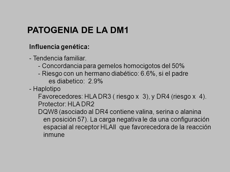 PATOGENIA DE LA DM1 Influencia genética: - Tendencia familiar. - Concordancia para gemelos homocigotos del 50% - Riesgo con un hermano diabético: 6.6%