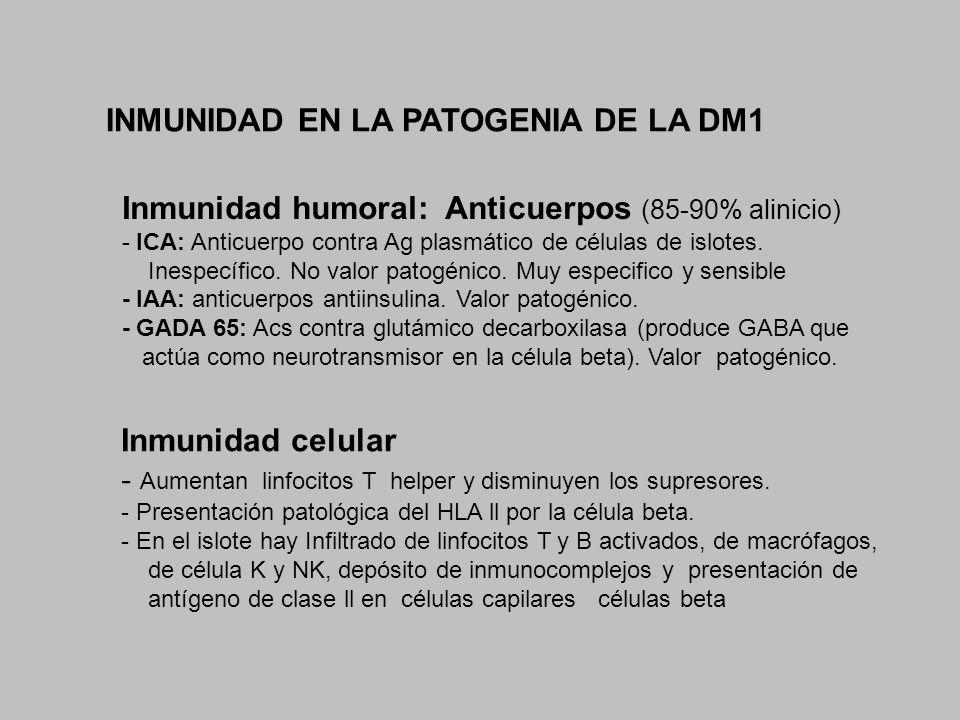 INMUNIDAD EN LA PATOGENIA DE LA DM1 Inmunidad humoral: Anticuerpos (85-90% alinicio) - ICA: Anticuerpo contra Ag plasmático de células de islotes. Ine